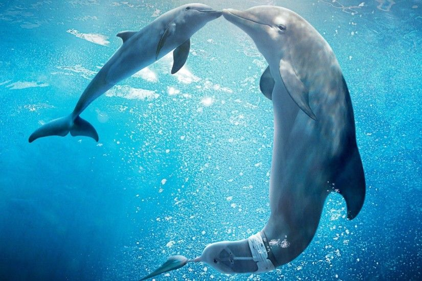Dolphin Underwater Wallpapers Photos