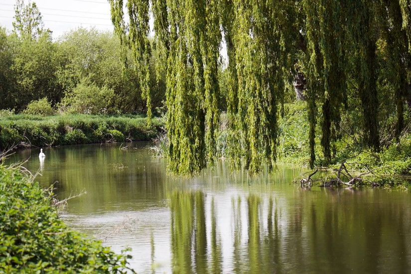 English rural scene with weeping willow on the river side. Stock Video  Footage - VideoBlocks