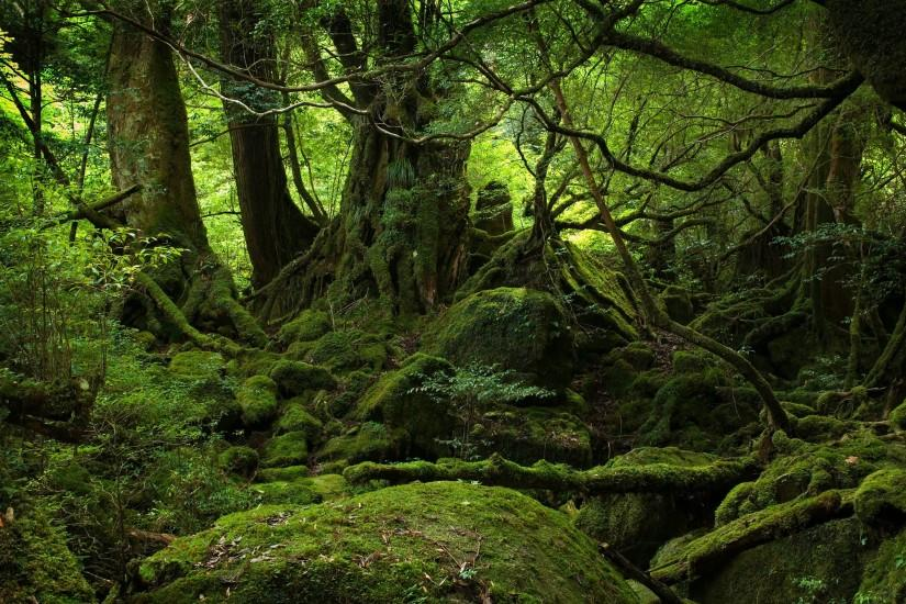 Lush Green Forest desktop wallpaper