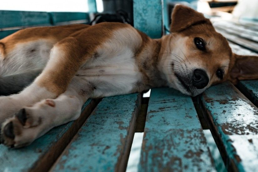 3840x2160 Wallpaper shiba inu, dog, puppy, lying