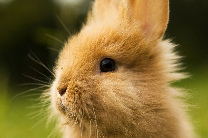 Baby Bunny Wallpapers - Wallpaper Cave