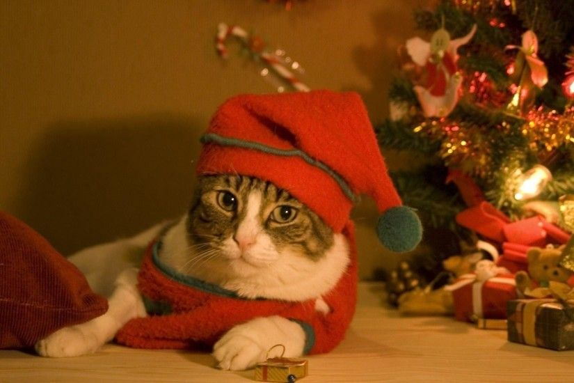 1920x1080 Wallpapers For e Cute Merry Christmas Wallpaper Cats cat  1920×1080