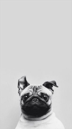 Pug iPhone 7 Wallpaper
