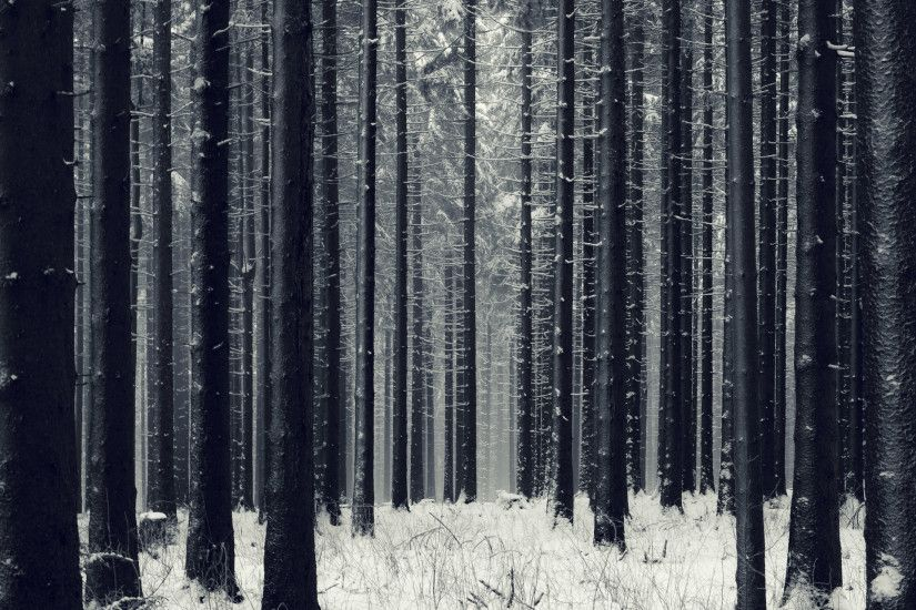 Snow Forest HD Wallpapers - PicVenue - HD Wallpapers