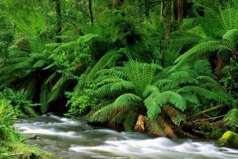 Nature Australia Park National Ferns Streams Abstract Wallpapers