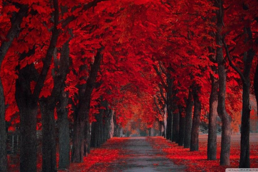 Pretty Red Leaves Wallpaper