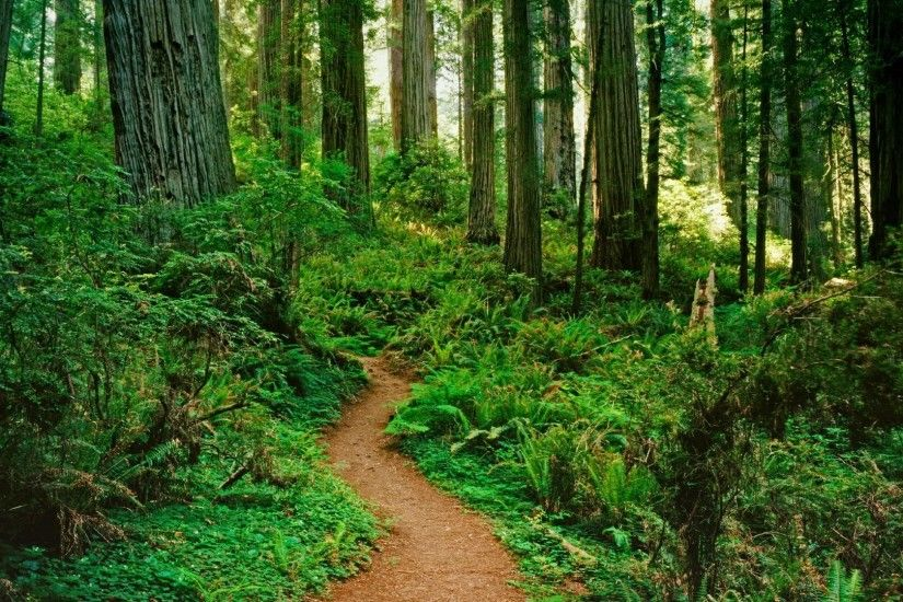 Download Forest Path Pictures 32576