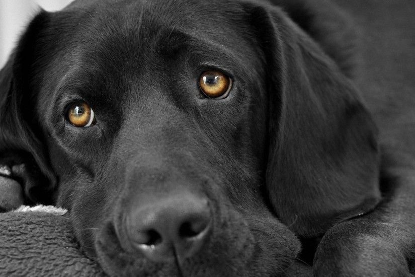 1920×1080 black magic dog eyes background hd desktop wallpapers cool images  amazing hd download apple background wallpapers free display 1920×1080  Wallpaper ...