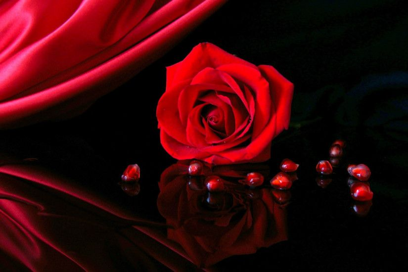 2560x1600 Red Rose In Black Background