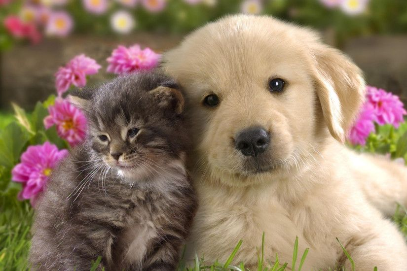 ... Pretty Full Hd 1080P Puppy Wallpapers Hd, Desktop Backgrounds 1920X1080  And also Adorable Puppy Wallpaper ...