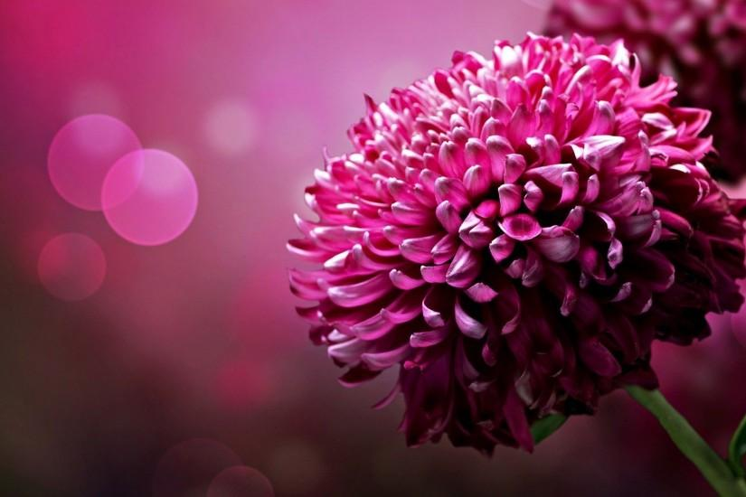 Page 1756 | Flower wallpapers , Flowers wallpapers hd , Flowers .