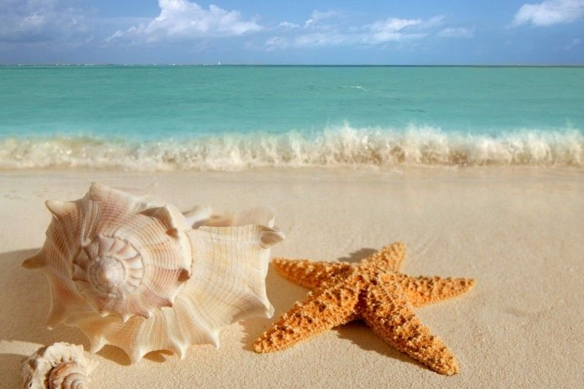 Sea Shells wallpaper