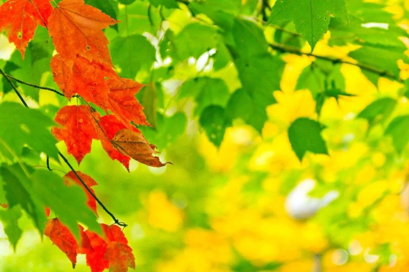 Leaves Green Ones Leaf Red New Nature Wallpaper HD Free Download