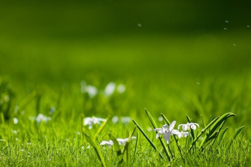 grass wallpaper 1920x1080 for hd 1080p
