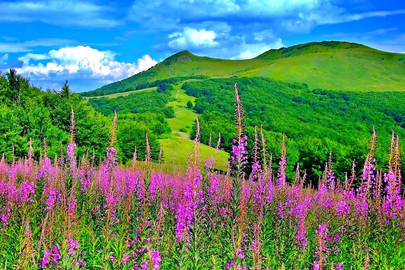 Spring Landscape Wallpapers | The Art Mad Wallpapers