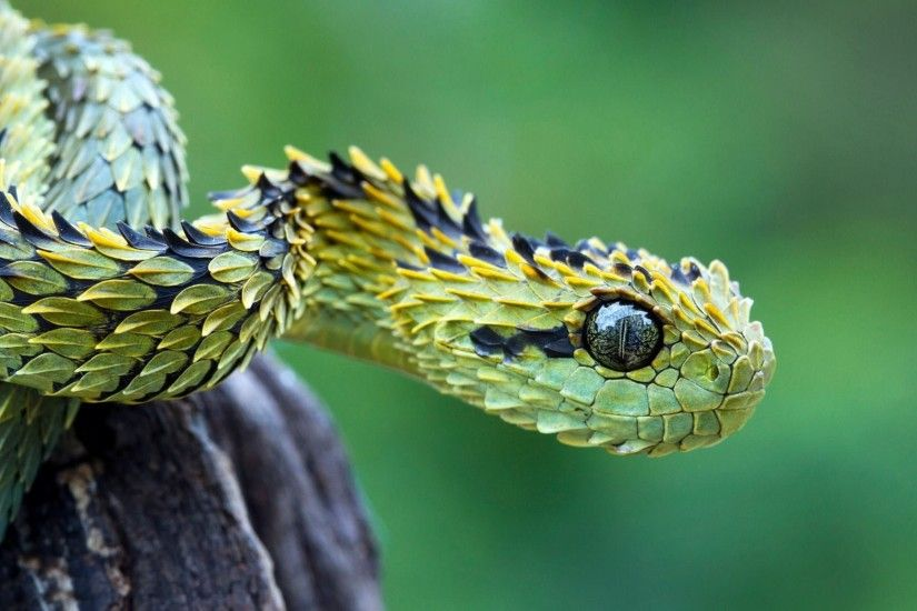 284 Snake HD Wallpapers Backgrounds Wallpaper Abyss - HD Wallpapers