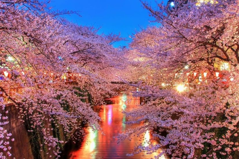 Cherry Blossom Tree Photos Desktop Wallpaper #0rh8js