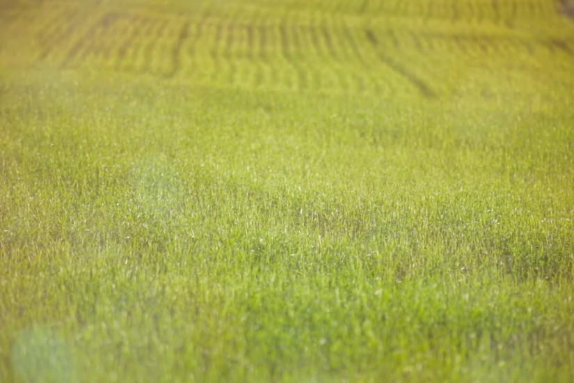 Green grass field background. A green grass lawn. Beautiful nature scenery  background. Shallow DOF (depth-of-field). Stock Video Footage - VideoBlocks