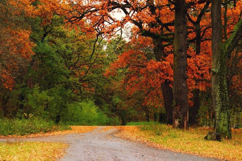 1920x1080 Wallpaper autumn, wood, trees, road, track, intersection,  crossroads