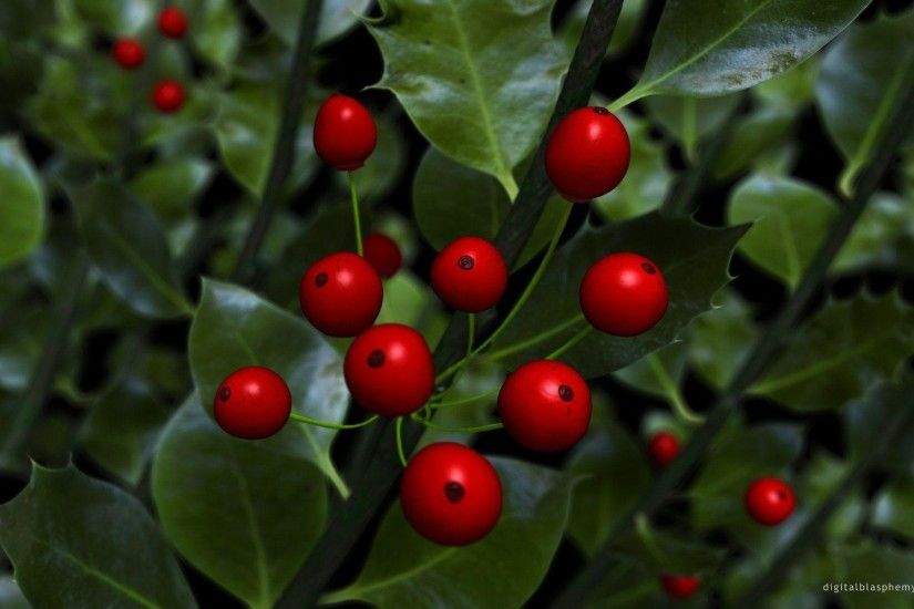 Christmas Holly Berries Background wallpaper – wallpaper free download