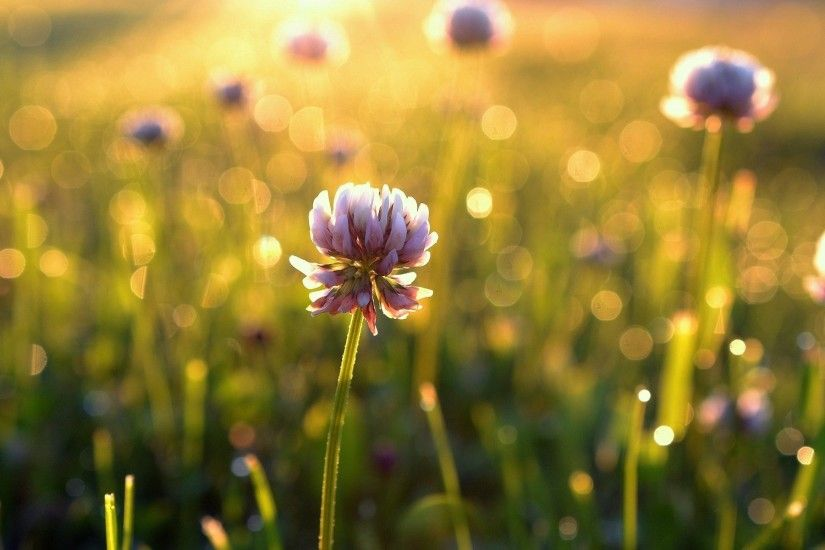flower flower flower grass green leaves summer sun morning day the field  meadow beauty blur bokeh