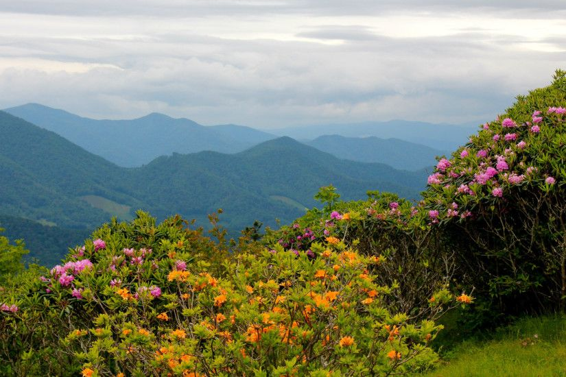 North Carolina Nature Flowers mountains landscapes wallpaper .