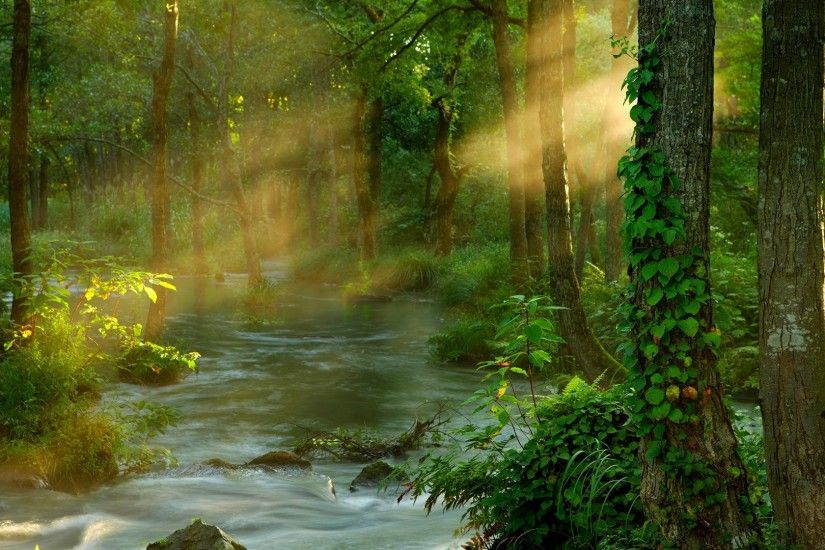East Tag - FOREST SUNBEAMS Light Stream Flowing Tree Asia Natural World  Japan Fog Landscape Woodland