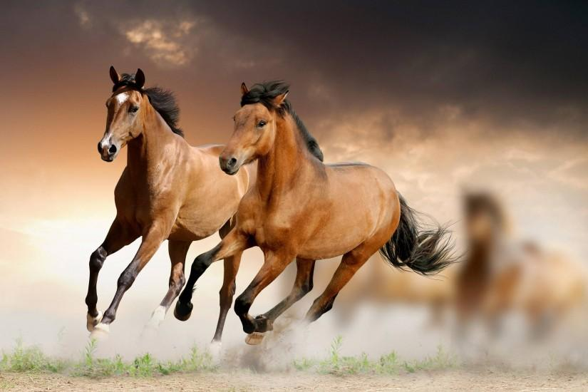 best horse wallpaper 2880x1800 720p