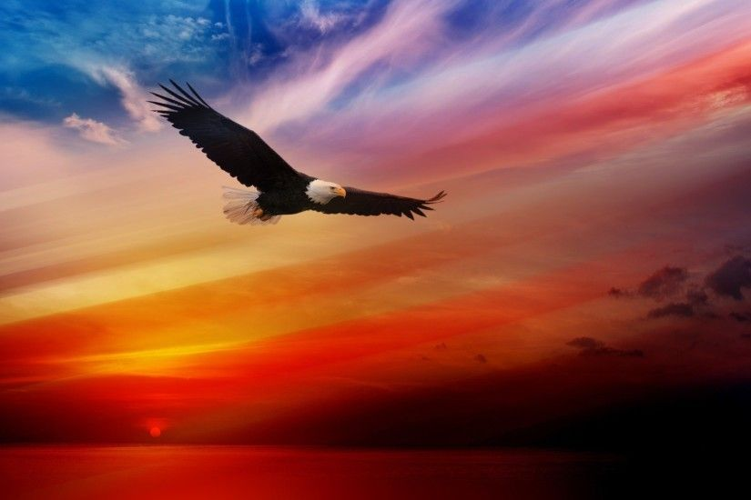 Eagle Wallpaper Coll