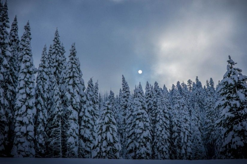 Preview wallpaper winter, fir, snow, forest 1920x1080