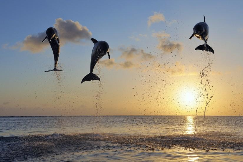 Dolphin Photography in Sunset