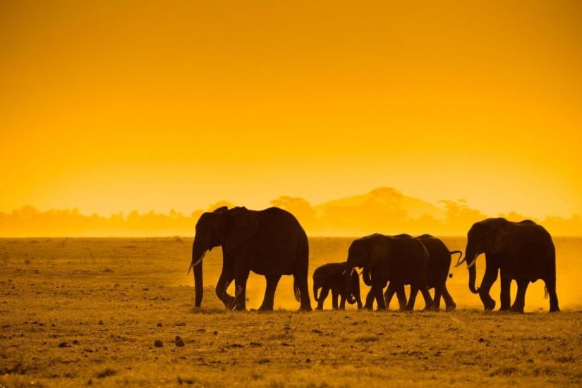 African animals wallpaper background.