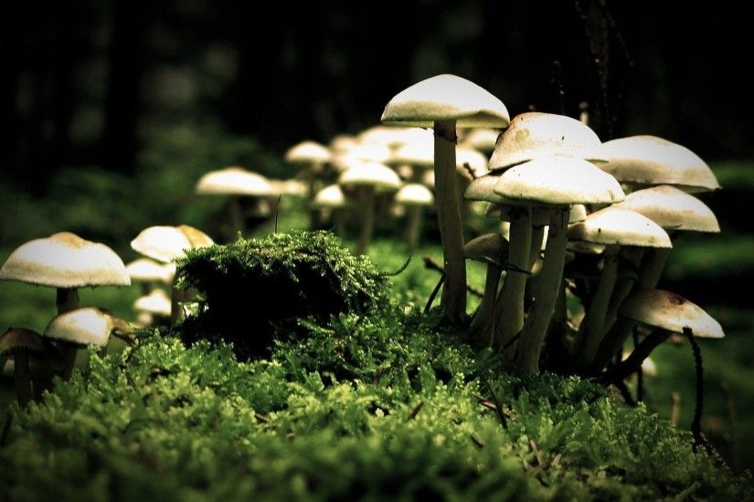 White Mushroom HD desktop wallpaper : High Definition : Fullscreen  1920×1080 Mushroom Wallpaper (