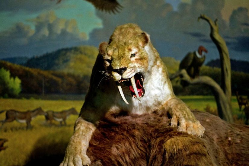 Filename: smilodon2.jpg
