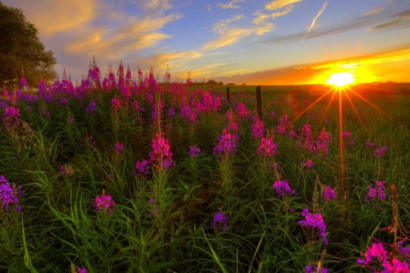 Fields of Wildflowers Wallpaper - WallpaperSafari ...