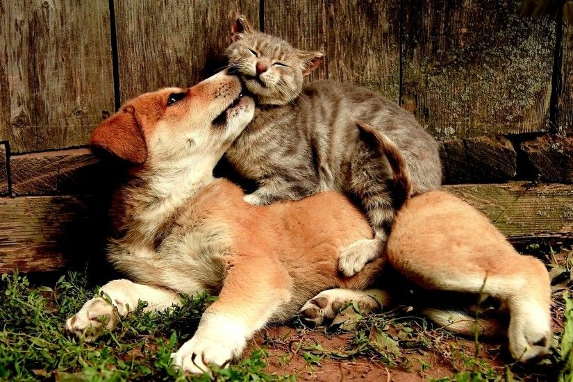 Friends animal cute cat dog wallpaper | 1920x1200 | 817677 | WallpaperUP