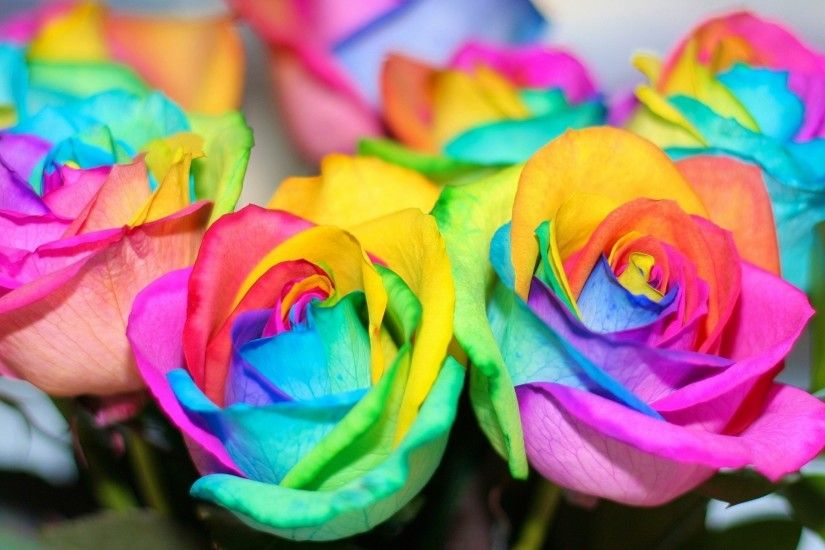 Rainbow Flower Wallpaper - WallpaperSafari
