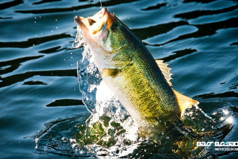 Fishing Tag - Fishing River Fish Lake Water Sport Fishes Bass Wallpaper Hd  Android for HD