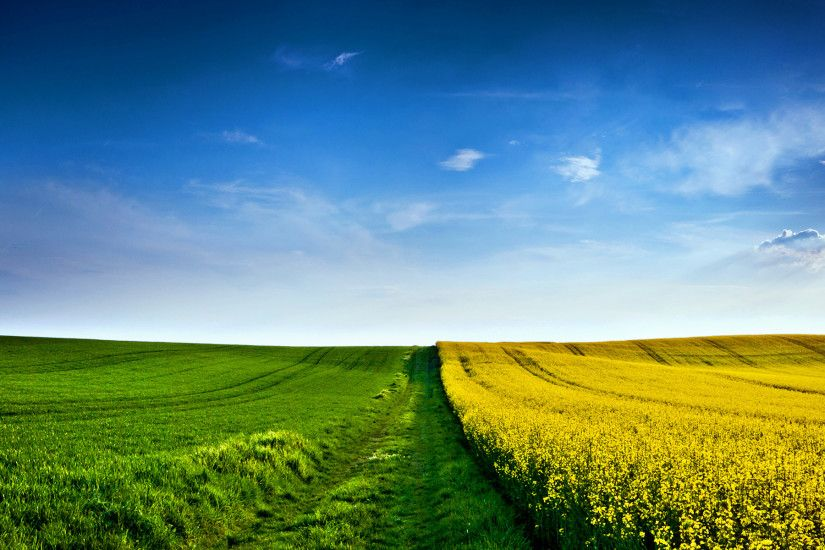 15 Wonderful HD Field Wallpapers