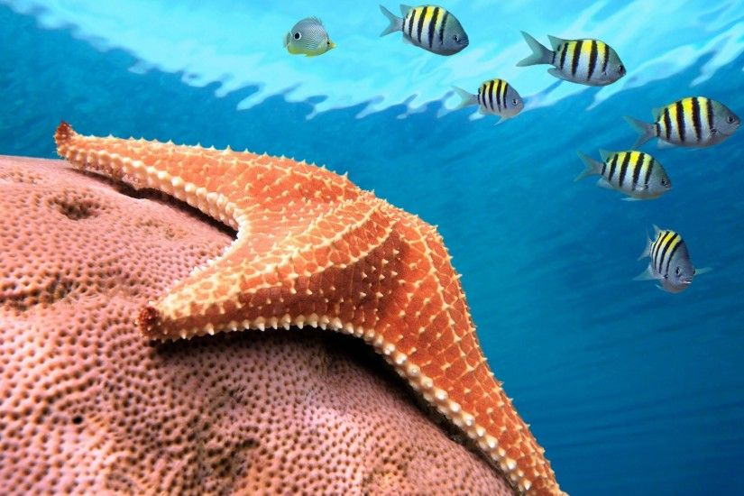 Starfish Hug The Rock. Starfish Hug The Rock Desktop Background