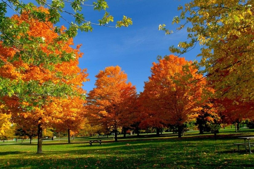 Orange Autumn HD Wallpapers