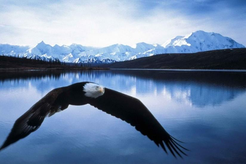 Bald Eagle Flying Mountain View HD Wallpaper