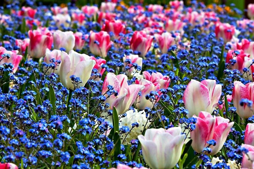 Spring Flowers Background Wallpaper - HD Wallpapers