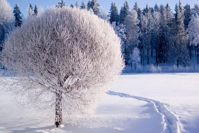 full size winter backgrounds 2560x1600 for 4k