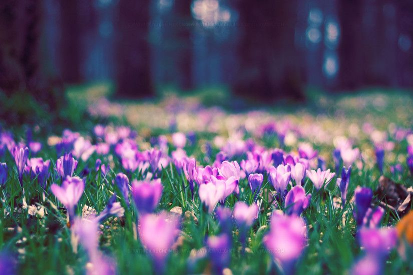 Spring Nature Wallpaper Desktop - WallpaperSafari