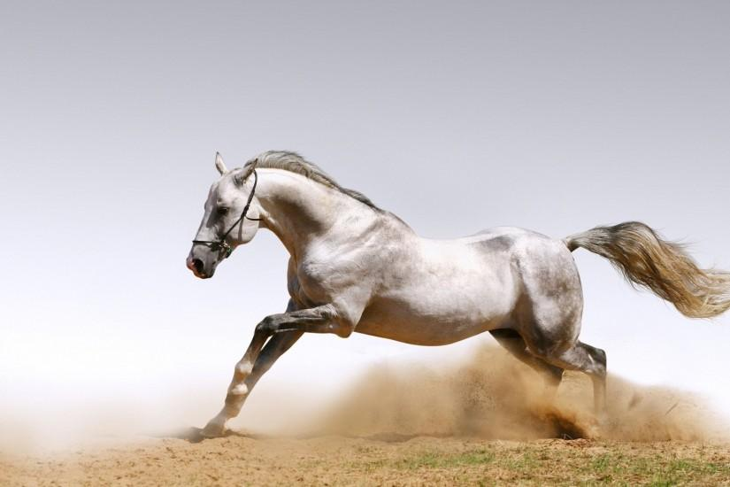 download free horse wallpaper 2560x1600
