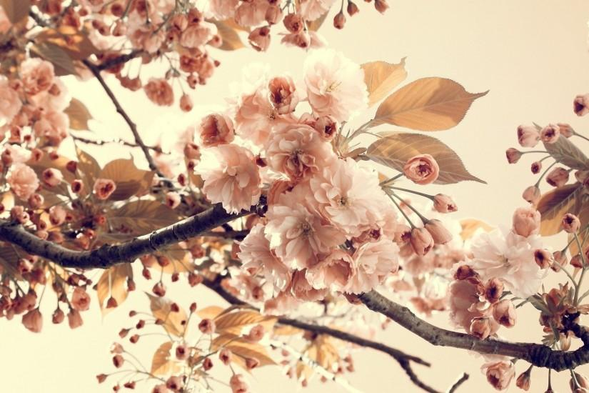 full size floral background tumblr 1920x1080