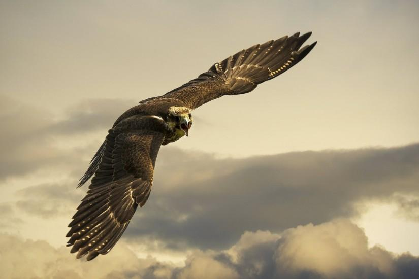 Preview wallpaper eagle, flight, sky, wings, clouds 2560x1440