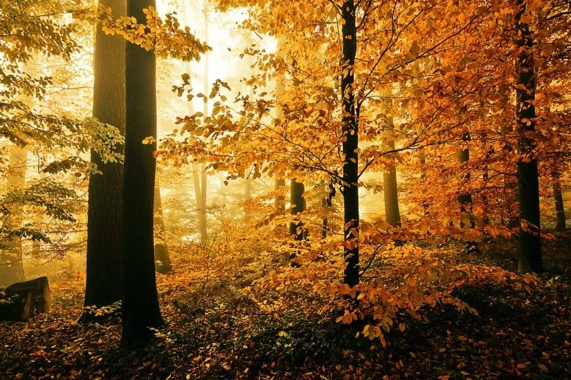 fall woods pictures | Related Post To Autumn day in the woods wallpaper