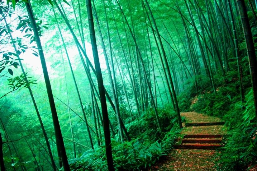 Bamboo Forest - Google Search